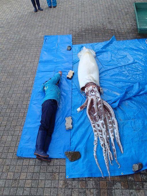 巨型墨鱼有3.4米长。岛根Aquas水族馆facebook