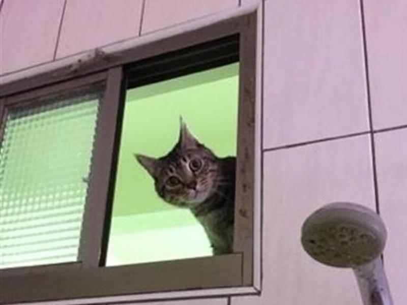 咸湿猫猫「眼甘甘」望到实。网上图片