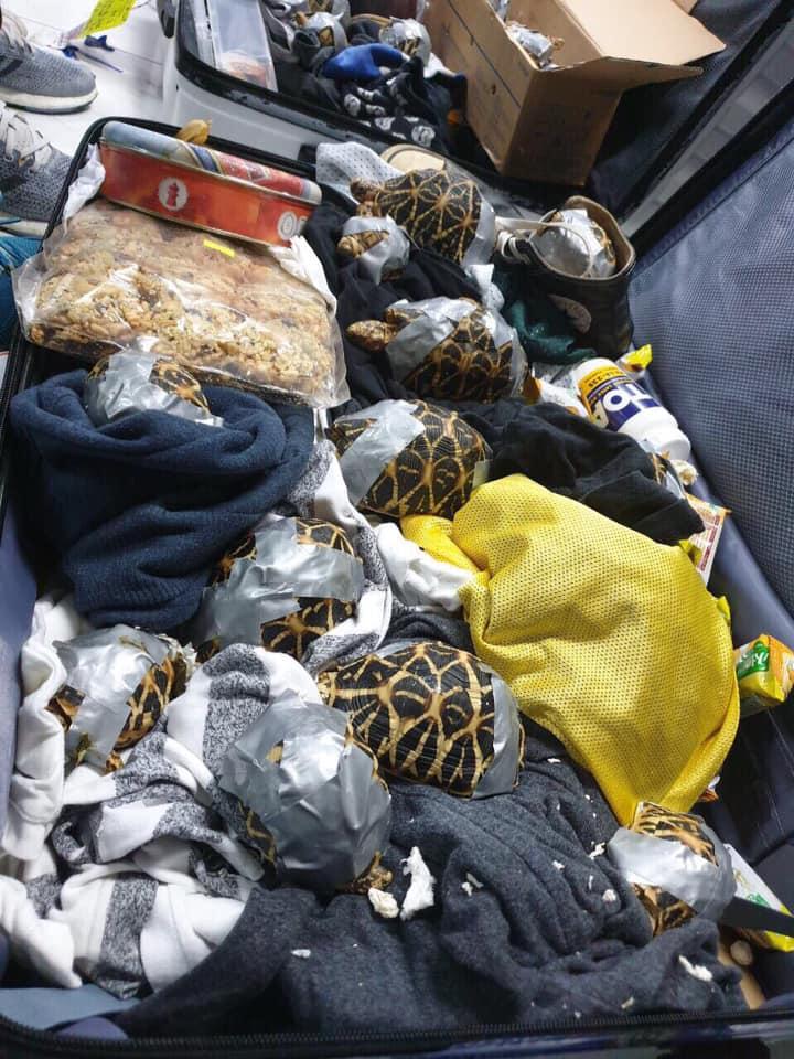 菲律賓機場行李檢逾1500隻活龜。網上圖片