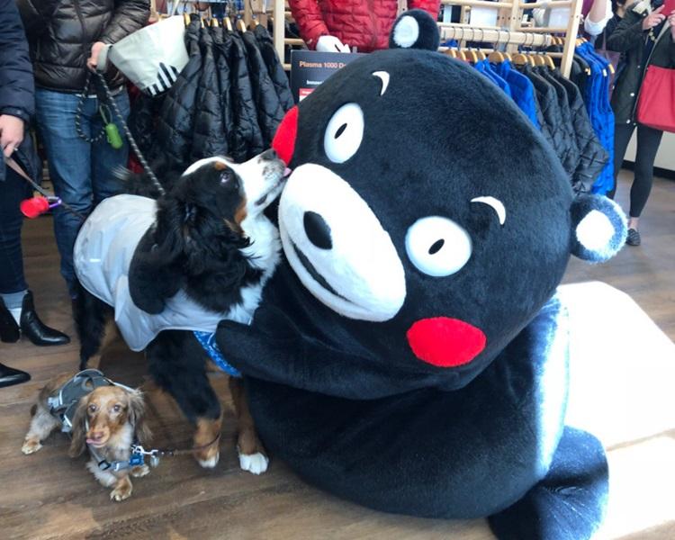 「熊本熊」经常出席各种活动。熊本熊Twitter