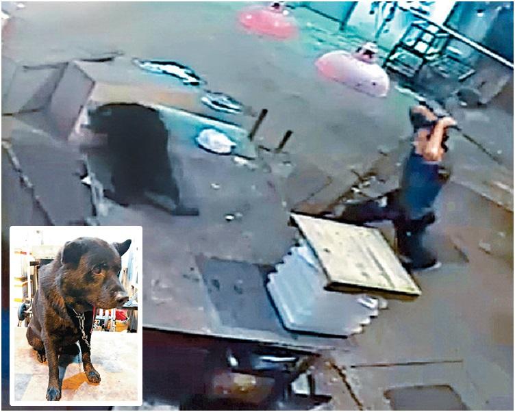 该名男子被闭路电视拍虐打黑唐狗,黑唐狗要住院5天。网图