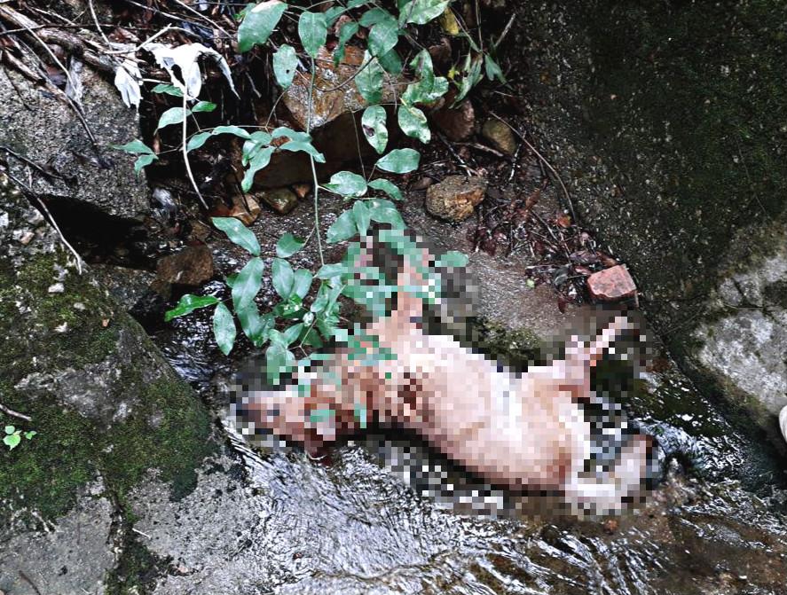 流浪狗懷疑被人打死。拯救遺棄寵物中心圖片