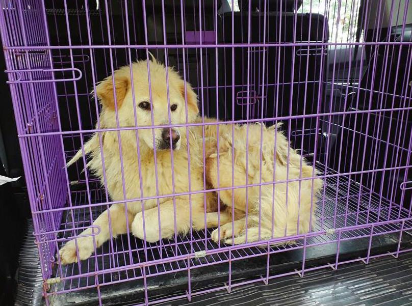 義工只能救起前腳受傷的「金Mo」。拯救遺棄寵物中心圖片