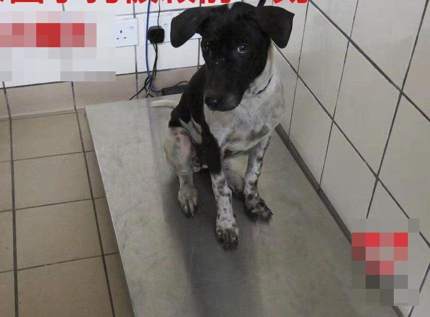 Facebook专页「香港动物报」图片