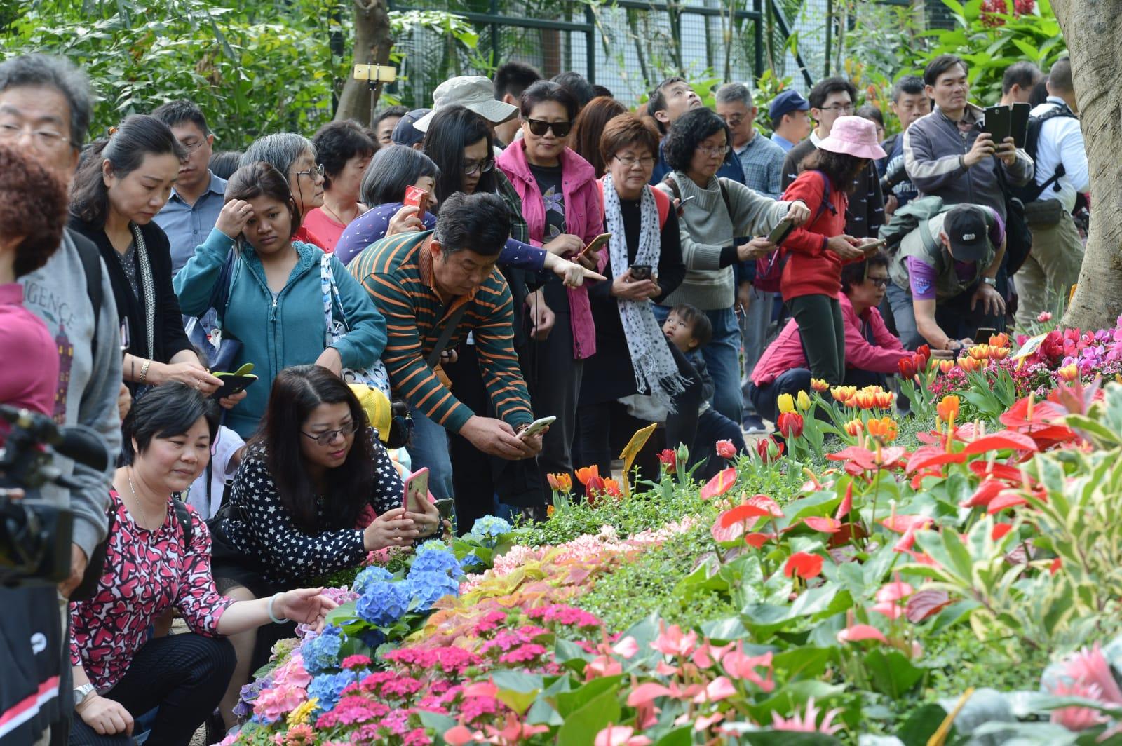市民欣賞禮賓府內盛開燦爛的花卉。