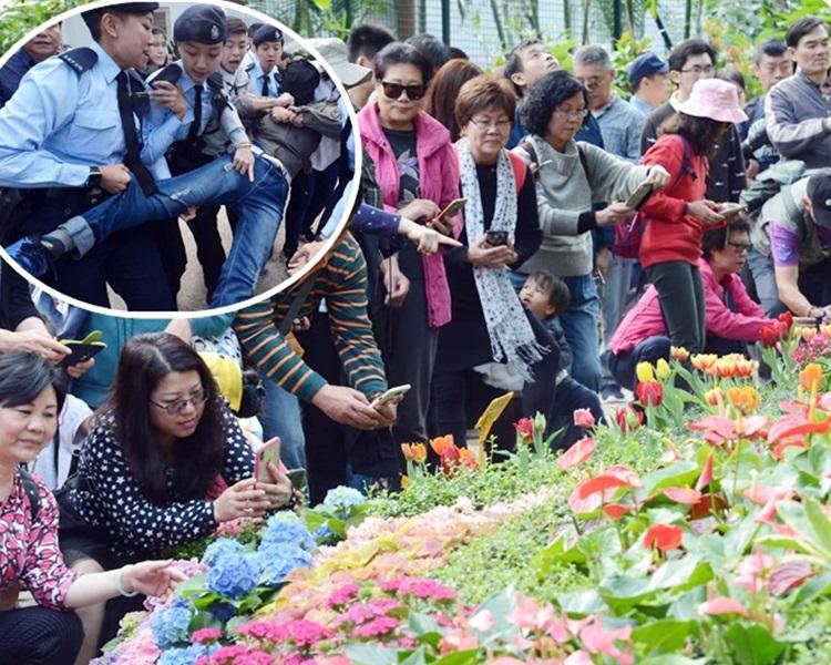 市民欣賞禮賓府內盛開燦爛的花卉。警方抬走示威者(小圖)。