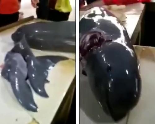 湛江街市疑有魚販宰殺售賣江豚 警方介入調查