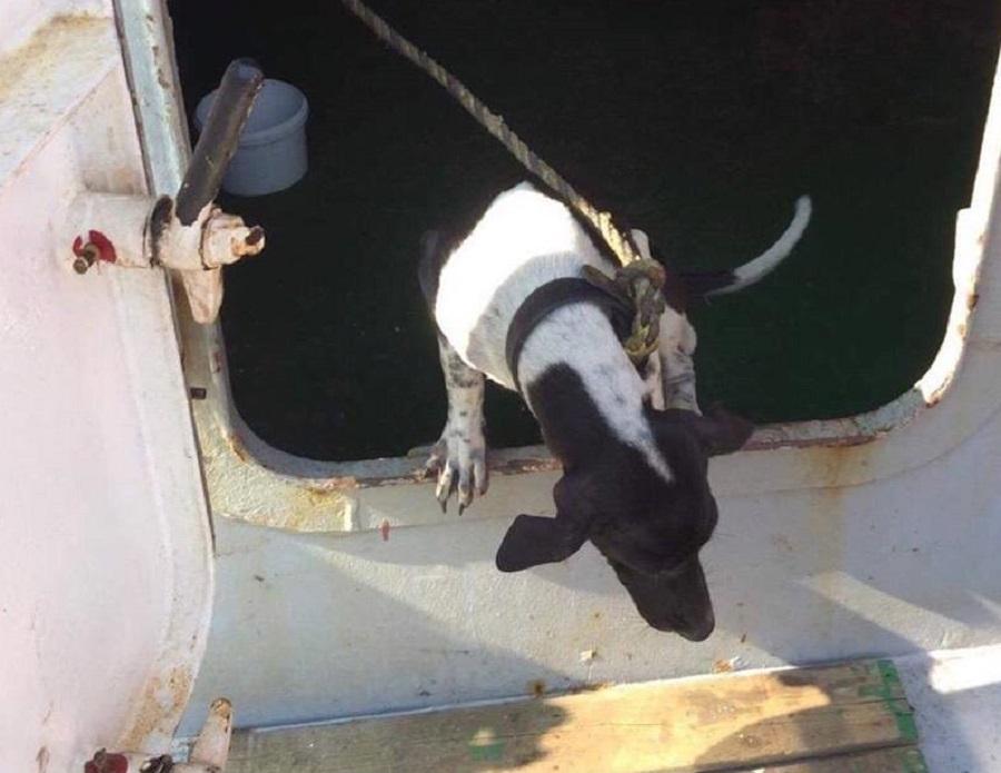 早前泰国搭货船来港一只小狗被渔护署带走及人道毁灭。网上图片