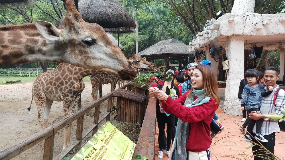 呂慧儀鍡長頸鹿很開心。