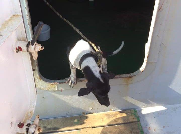 泰国一只狗误闯货船来港遭人道毁灭。Facebook群组「泰旅谷真好玩」图片