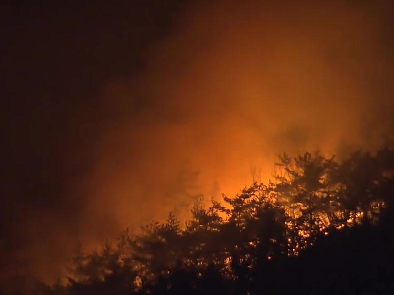 釜山海云台区森林大火。(网图)