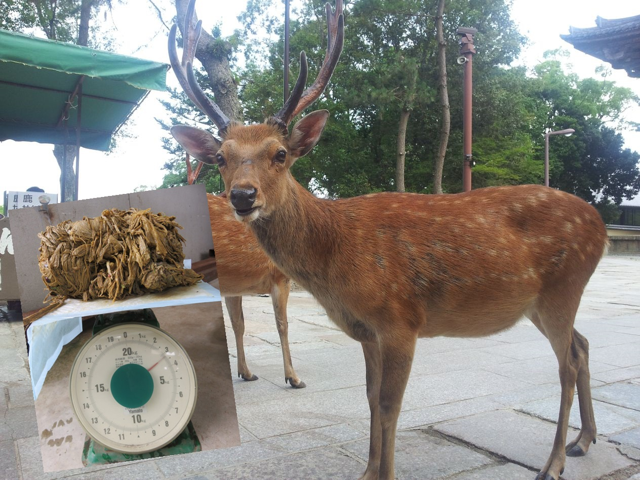一只奈良鹿的胃中竟有重达3.2公斤的塑胶袋。网图