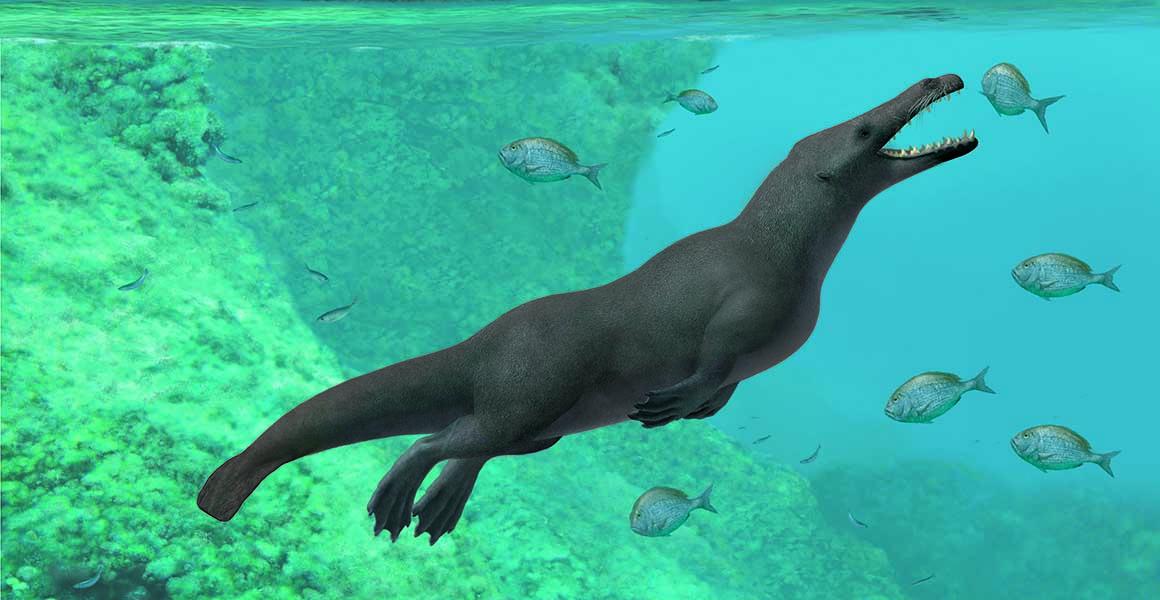 秘魯太平洋沿岸早前發現有4260萬年歷史的四足鯨化石。網上圖片