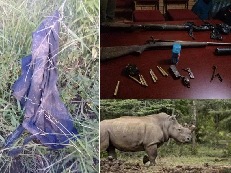 盜獵犀牛者屍體被獅群吃剩頭骨和褲子(右),當地警方逮捕其他三名盜獵者,並查獲兩支獵槍和彈藥(左)。