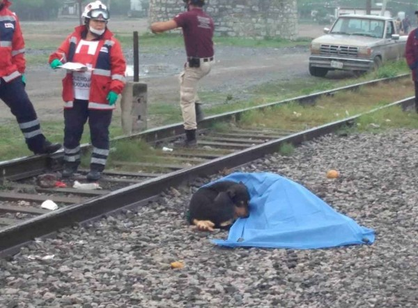男主人被火车撞死,忠犬在旁伴尸拒绝离开。网图