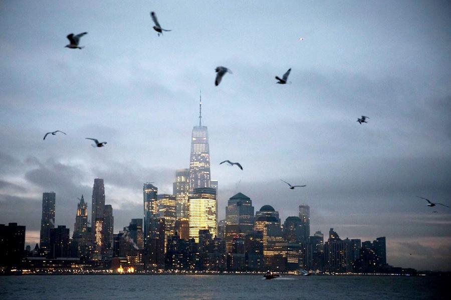全美平均每年有大约6亿只雀鸟,在飞行时撞向摩天大楼身亡。   示意图
