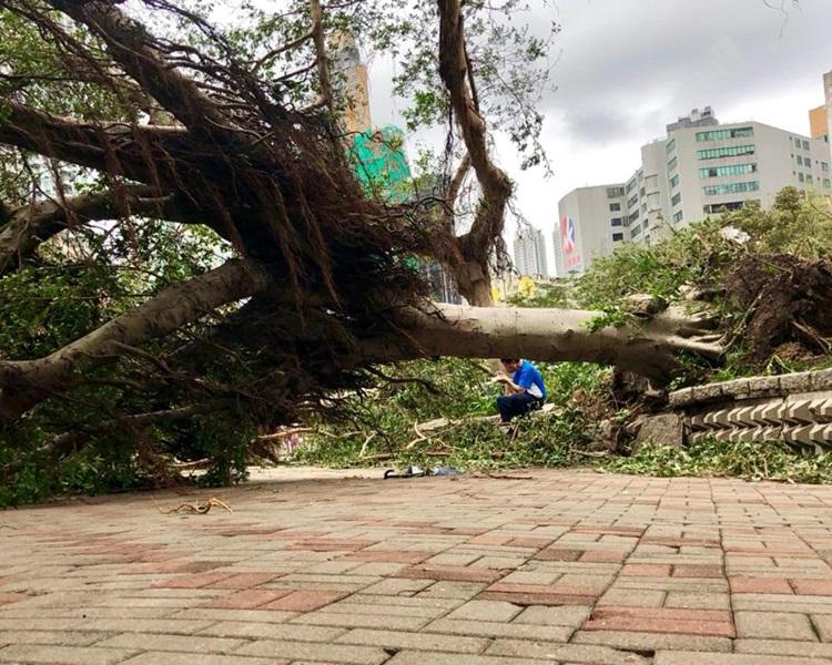 「山竹」令全港多處仍有塌樹。資料圖片