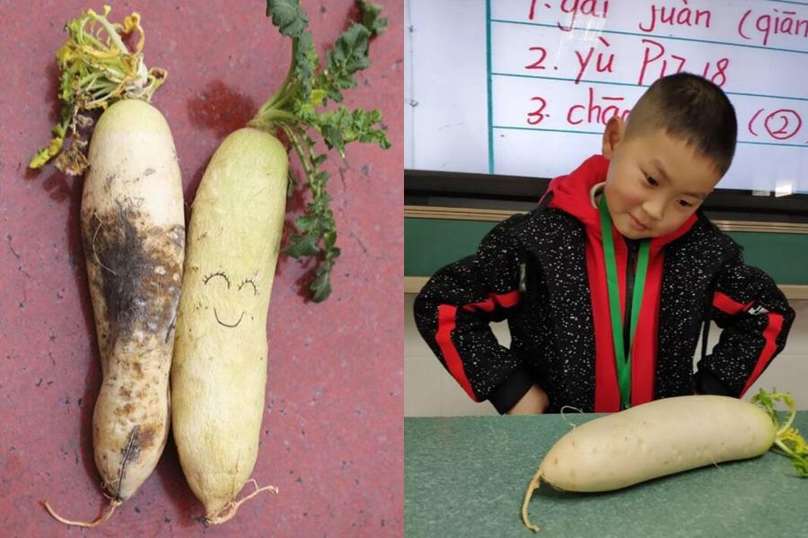四川小學進行了一項「蘿蔔實驗」。 微博圖片