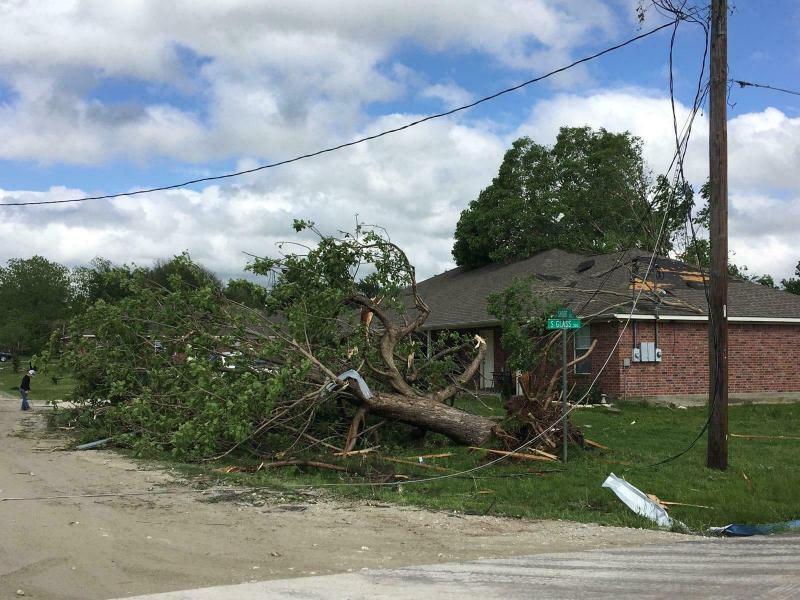 在德克萨斯州富兰克林被龙捲风吹袭后,大树倒地。