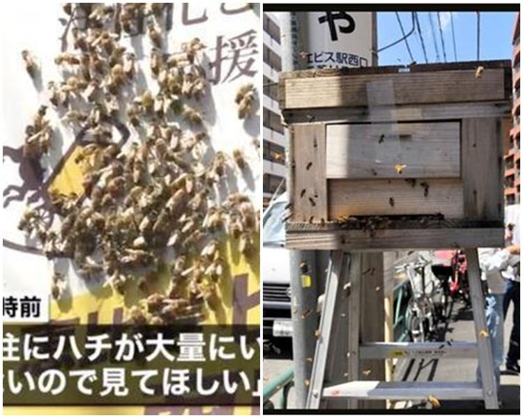 东京街头有万只蜜蜂乱舞。网图