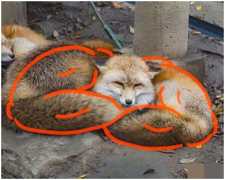 網民加上數筆神來之筆。網圖fox_info_net