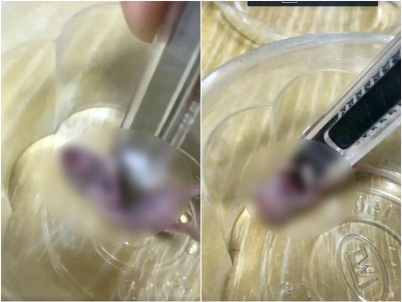 片段中,有人用鎅刀剌向倉鼠腹部,場面血腥。fb圖片