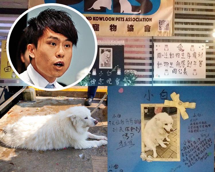 銀狐犬「小白」遭主人掟落街慘死。鄺俊宇(小圖)要求加重虐待動物罰則。  資料圖片