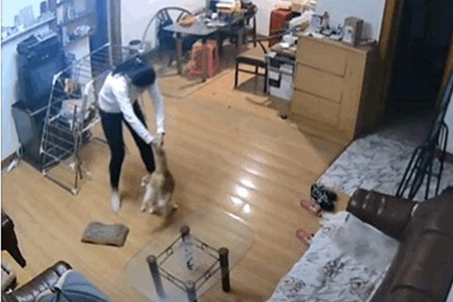 內地有網友舉報其同屋合租人趁自己旅遊期間虐待其愛貓,包括腳踢、毆打、追趕等。 影片截圖