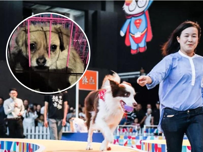 上海世界杯犬展附近有餐廳公然賣狗肉。網圖