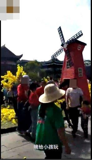 貴州丹寨萬達小鎮內裝飾用的黃色花朵,竟被遊客搶至一朵不剩。網圖