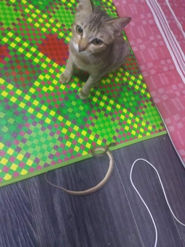 咬断耳机后猫咪一脸可邻。Fb