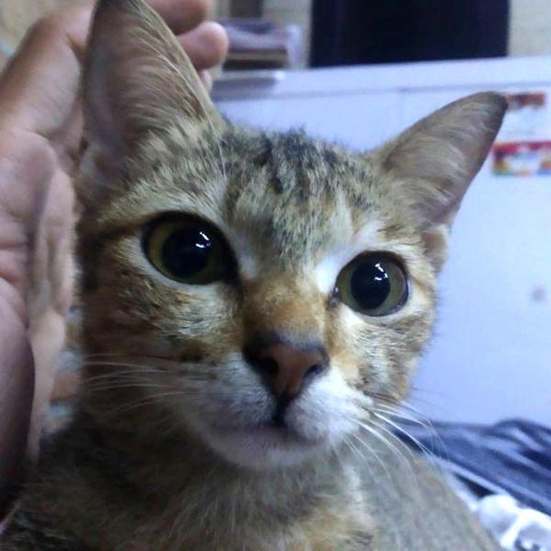 主人对住可爱的猫咪的哭笑不得。Fb