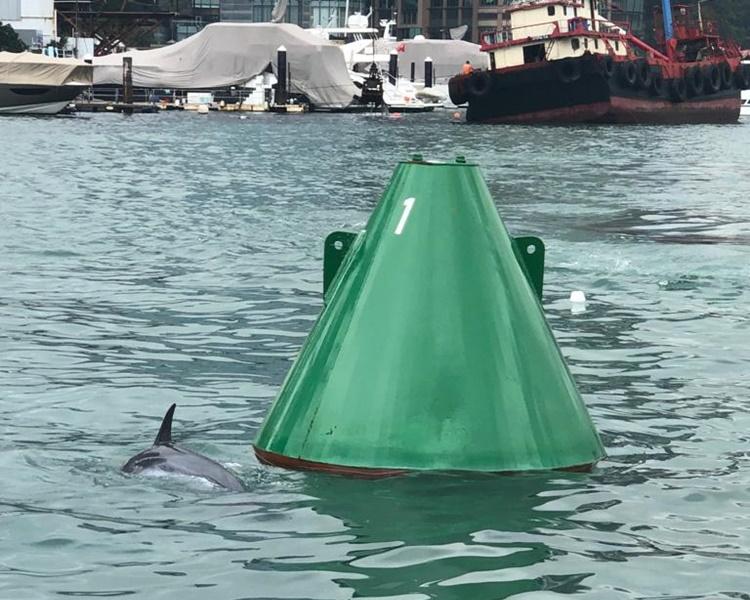 海豚不時躍出水面。讀者提供