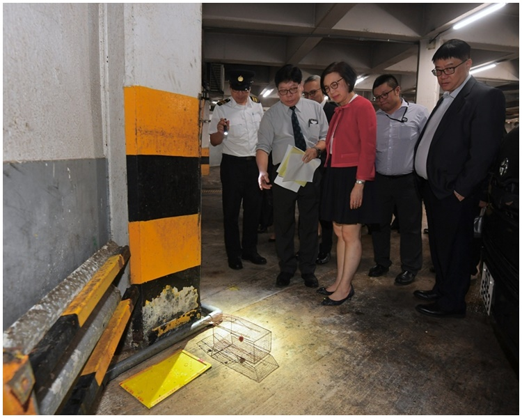 陳肇始在沙田美林邨視察擺放捕鼠器的位置。