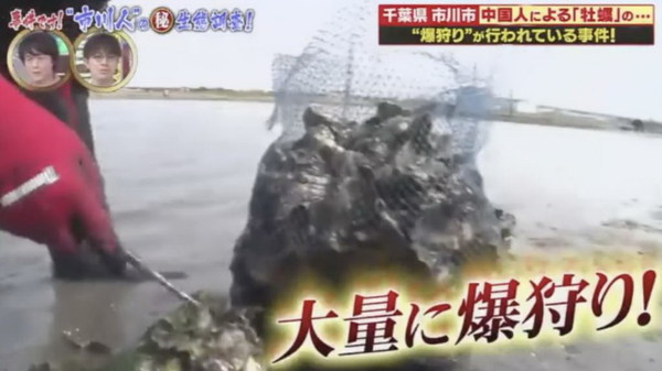 日本節目《ありえへん∞世界》追蹤遊客到千江戶川河口挖掘生蠔的情況。