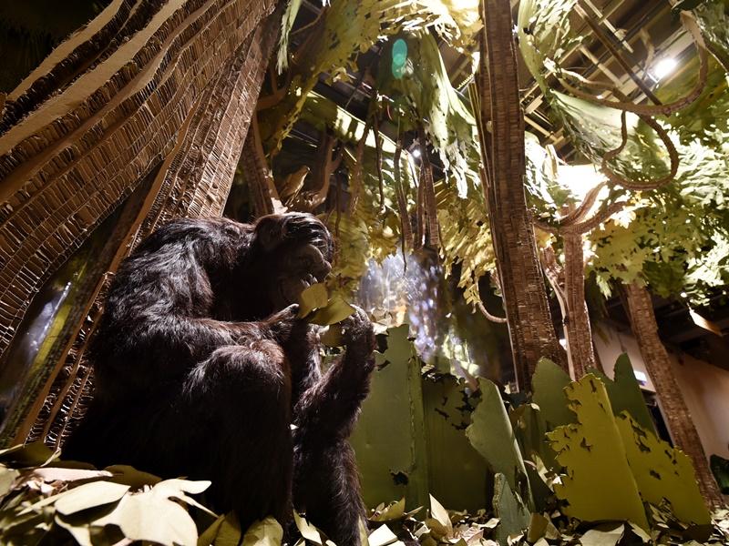 科學館變非洲叢林。