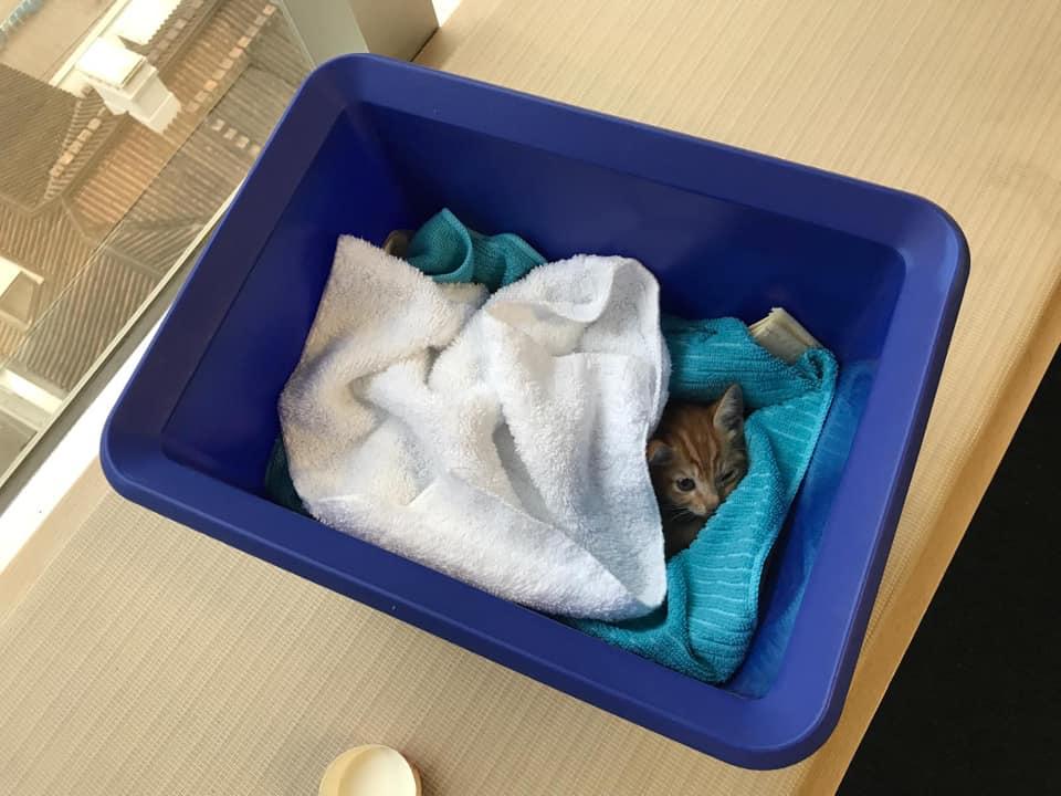 猫咪已经被新主人领养。网民Sally Cheung图片