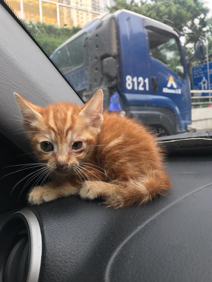 观塘道一只猫咪被网民救起。网民Sally Cheung图片
