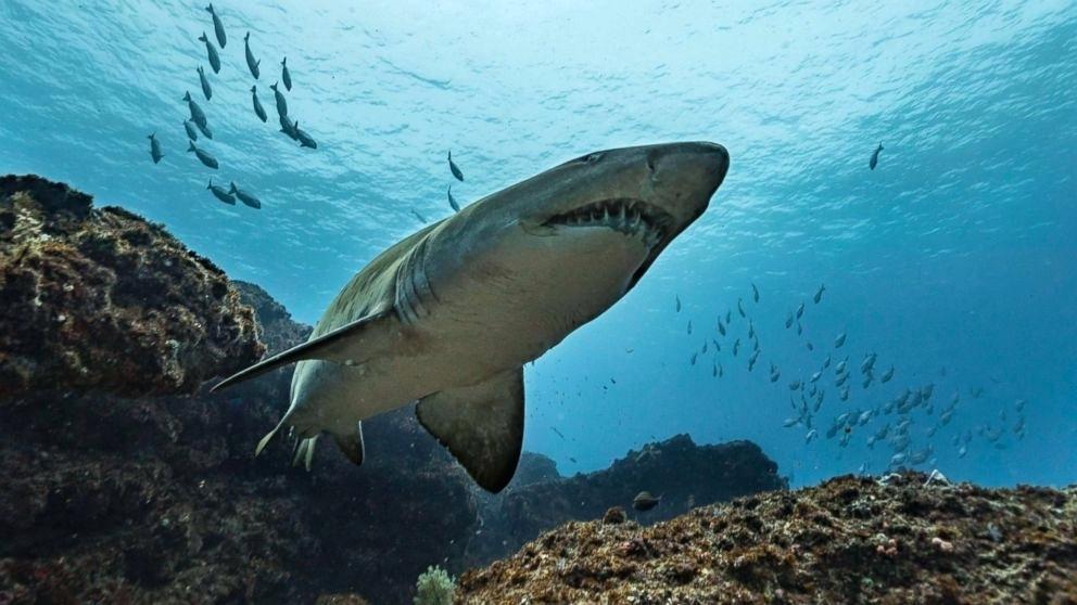 夏威夷毛伊岛发生鲨鱼咬死人事件。示意图片