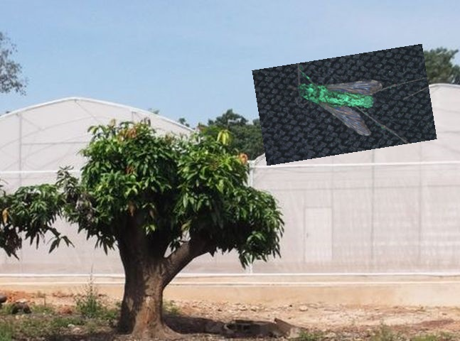 研究人員以雙層蚊帳包圍整個村,防止任何蚊蟲逃逸。網圖