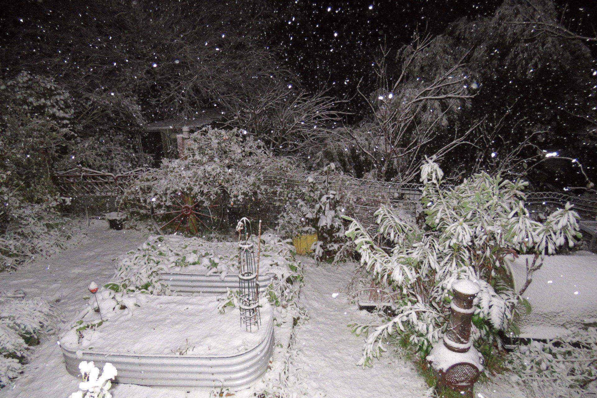 澳洲昆士兰罕有白雪纷飞。网上图片