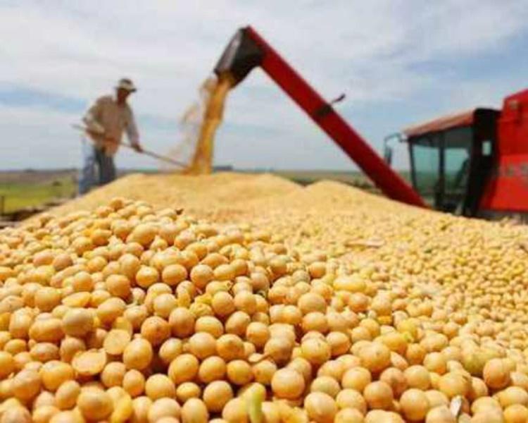 報道指中國已暫停進一步購買美國大豆。