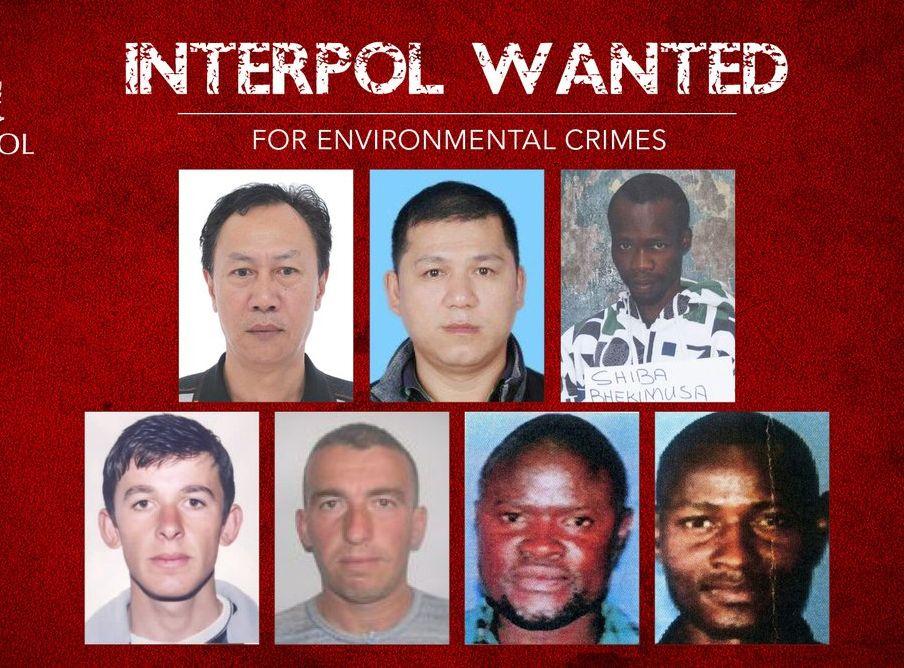 国际刑警通缉7名涉嫌触犯「环境罪行」的逃犯。国际刑警twitter图片