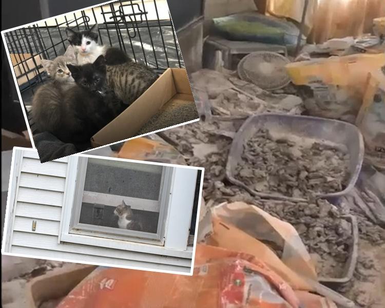 救援人员入屋发现超过200只猫咪尸体,只救出100只活猫。网图