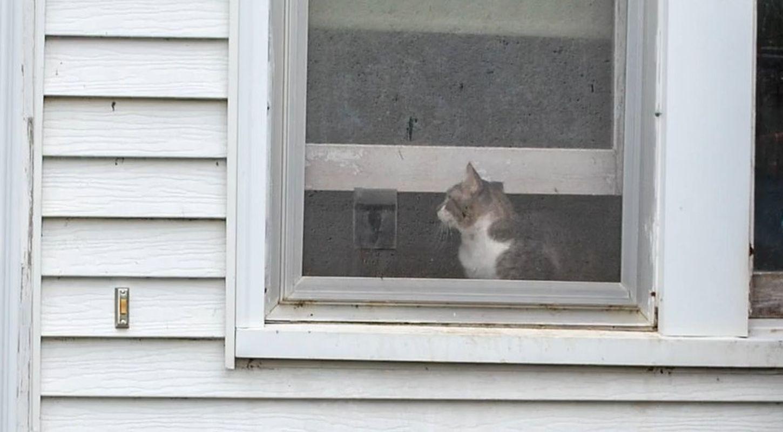 不少猫挤到窗口呼吸空气。网图