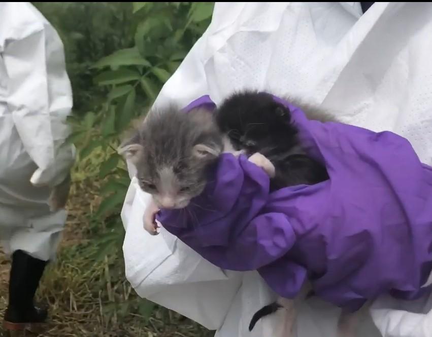 救援人员只救出100只活猫。ALR facebook