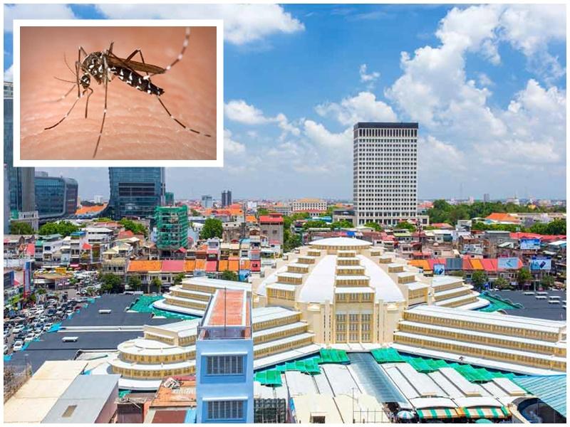 多國在柬中國公民感染登革熱。網圖