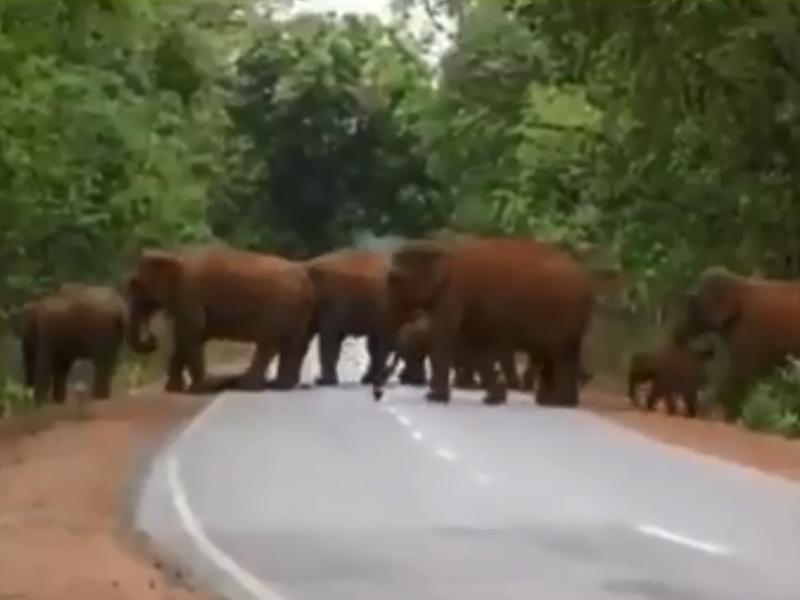 一群大象為小象送葬。 影片截圖