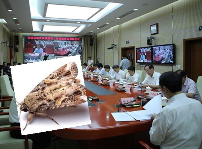 农业农村部召开全国草地贪夜蛾防控工作推进落实视频会议。网图
