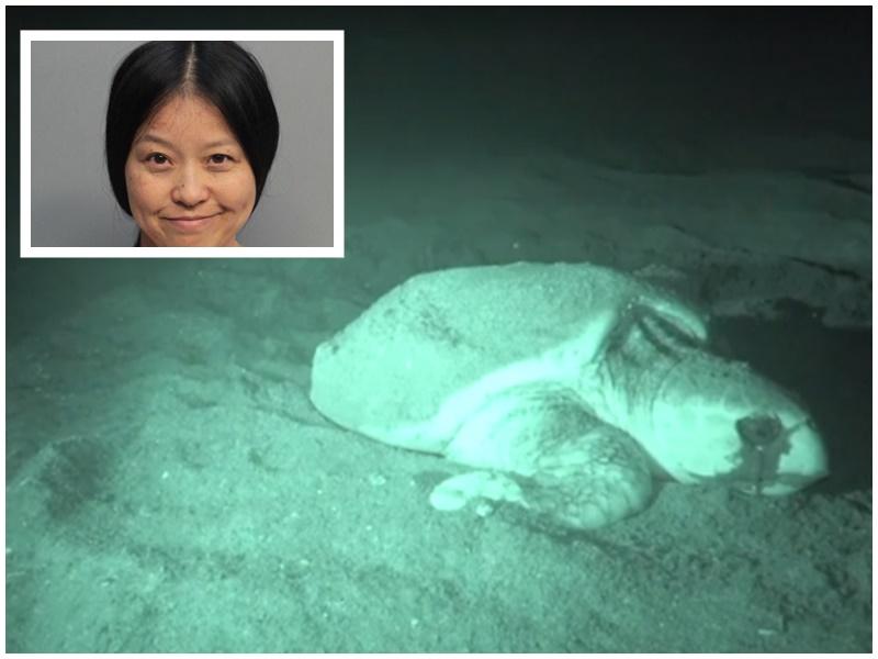 盧亞群(小圖)騷擾海龜被捕。網圖